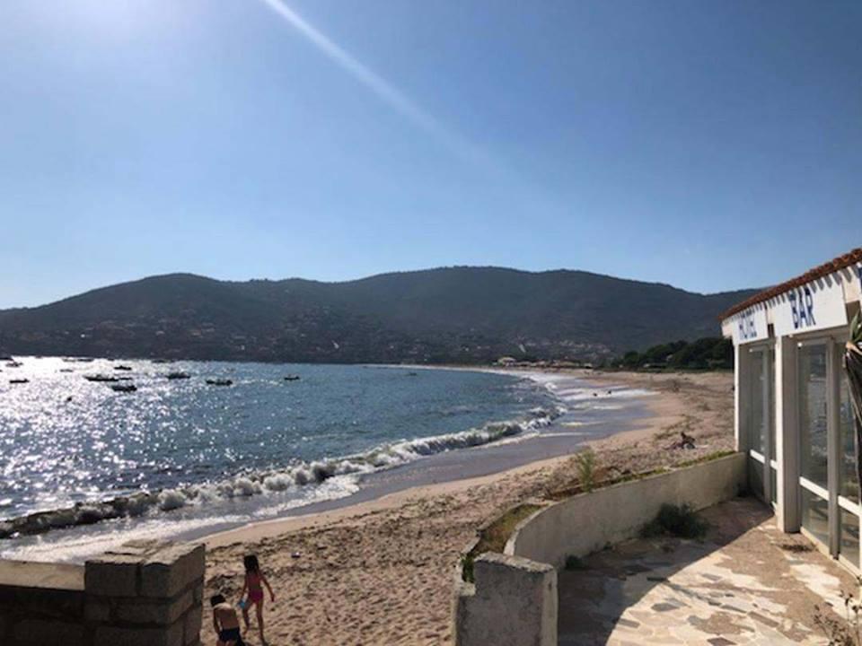 La propreté de la plage de Sagone remise en cause par les posidonies ?