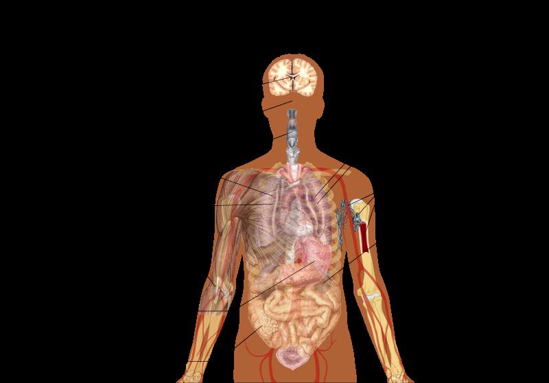 Cliquez svp (Symptômes)